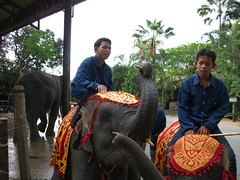 Elephant earning 20 baht