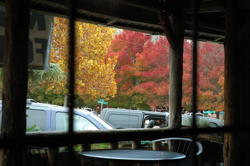 autumn trees red orange tree fall leaves restaurant leaf d70 lakeisabella