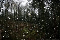 backyard blizzard    MG 6294