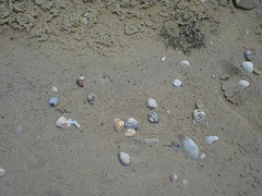pebble(0.0), rock(0.0), footprint(1.0), sand(1.0), seashell(1.0),