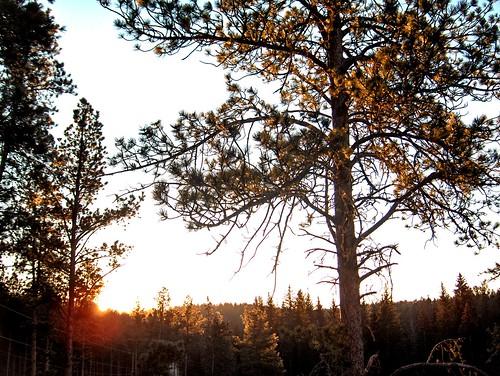 morning trees sky sun blackhills forest sunrise gold glow deadwood blackhillsnationalforest titleit