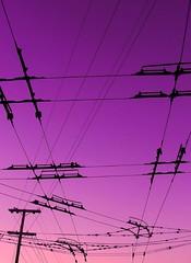 [フリー画像素材] 建築物・町並み, 電線, 紫色・パープル ID:201212162000