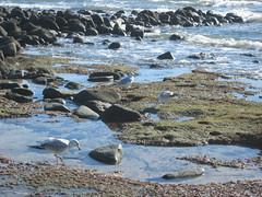 beach(0.0), tundra(0.0), bay(0.0), water(1.0), tide pool(1.0), body of water(1.0), wind wave(1.0), mudflat(1.0), wave(1.0), shore(1.0), coast(1.0), rock(1.0),
