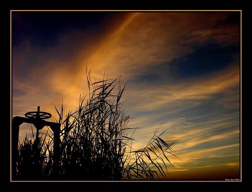sunset backlight contraluz atardecer sevilla andalucía topf50 nikon shots silhouettes 100v10f 500v50f alonso siluetas crank outstanding manivela puebladelrío alonsodr outstandingshots specsky abigfave 123f50