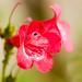 Flower @ f/2.8 by Anieteke