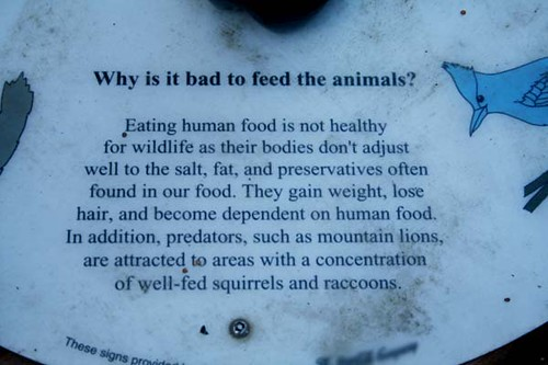 Why it is bad to feed the animals