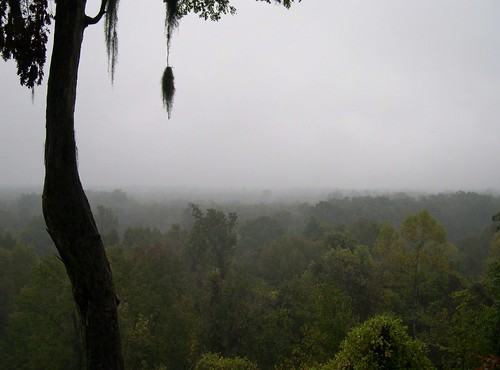 autumn mist tree sc fog forest river moss oak quercus ancient october quiet southcarolina swamp spanishmoss tillandsia carolina cypress bluff damp wetland congaree floodplain nyssa primeval taxodium
