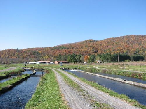 autumn mountain fish geotagged virginia hatchery geo:lat=3817889 geo:lon=7958106