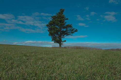 blue sky green nature pinetree michigan farm fiels littletraverseconservancy goodheartfarms
