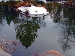 Reflections (Cranbrook)
