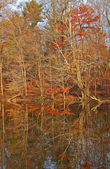 reflections on Speedwell Park Lake