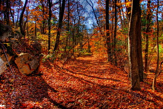 Trail gazing