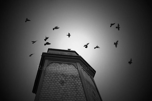 Hitchcock Tower by Julia Busato Photography