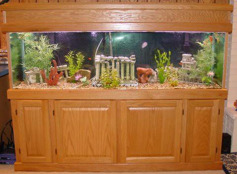 125 gallon fish tank Flickr - Photo Sharing!