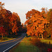 Country road in North Carolina in autumn