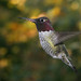 2006-11-19_hummingbird_6.jpg by DanDawson