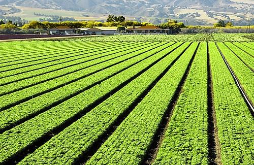 california green nikon farm d70s montereycounty soledad dalmdad