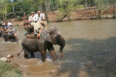 water buffalo(0.0), mud(0.0), wildlife(0.0), animal(1.0), indian elephant(1.0), elephant(1.0), elephants and mammoths(1.0), fauna(1.0), mahout(1.0), safari(1.0),