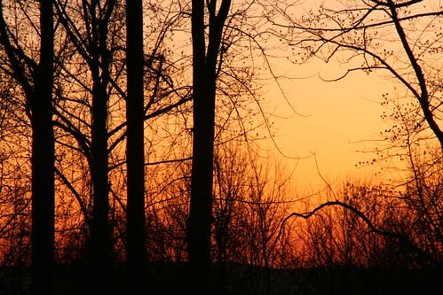 trees sunset sky color night woods dusk nj