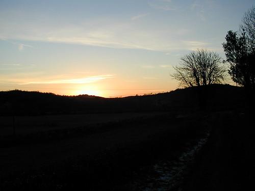 trees sunset skies