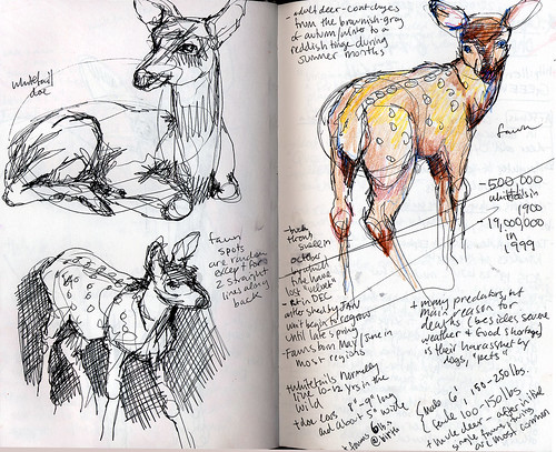 Deer Sketches II