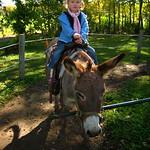 donkey_ponkey