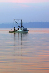 Oysters at Daybreak