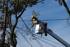 light fixture(0.0), mast(0.0), lighting(0.0), tree(1.0), street light(1.0), electricity(1.0), arborist(1.0),