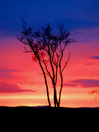 sunset tree vermont