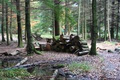 wetland, logging, woodland, tree, forest, natural environment, wilderness, jungle,