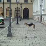 Munich - Dog