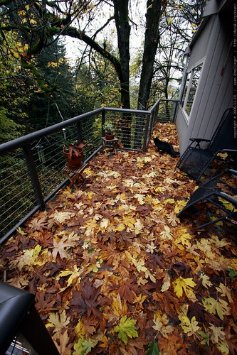 our back deck is a bed of leaves    MG 5501