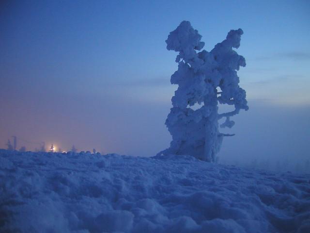 Un solitario árbol con nieve
