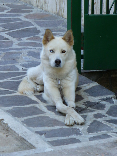 303495384 538e421f03 Nice Siberian Husky photos