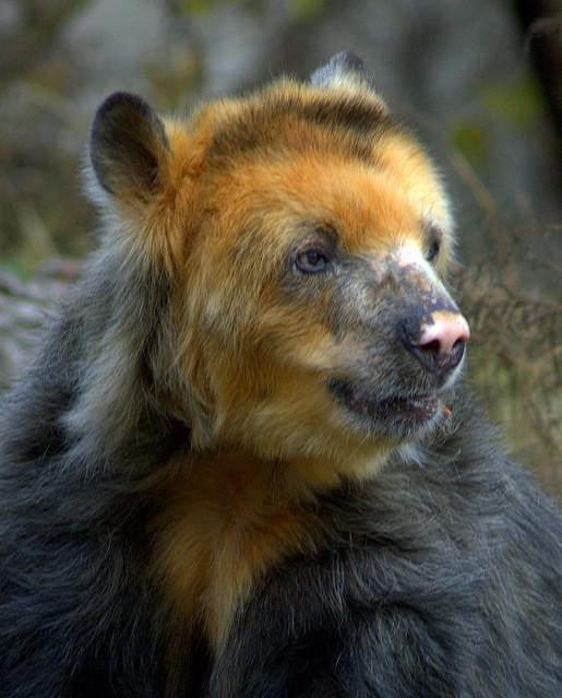 Image Result For November Bear Coloring