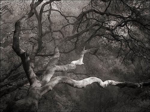 Tilden Regional Park, Berkeley, California - 11-24-2006 3-28-53 PM_0065 FF