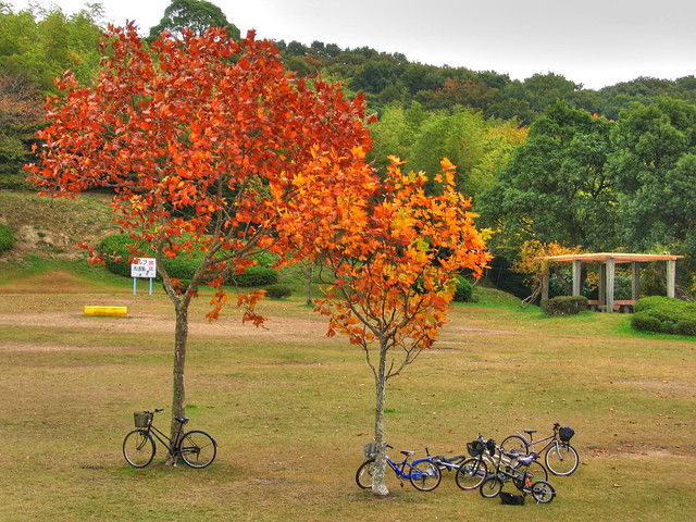 Photo:Lonely autumn trees By EugeniusD80