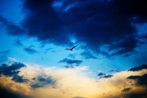 clouds sunrise seagull carpinteria