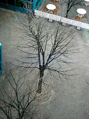 A tree from above
