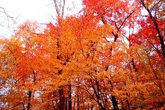 Fall 2006 - Trees in Orange