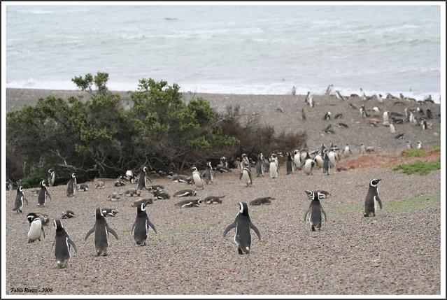 Patagonia - Punta Tombo