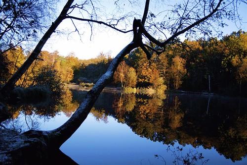 reflection reflections denmark danmark watermirror voetmann jespervoetmannmikkelsen flickrexport2demo 400d abigfave canon400d gulbjergmose vandspejl aplusphoto