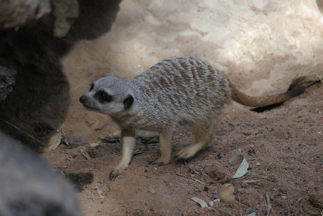 Scared little animals | Flickr - Photo Sharing!