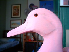 art, animal, water bird, duck, head, close-up, pink, beak, bird,