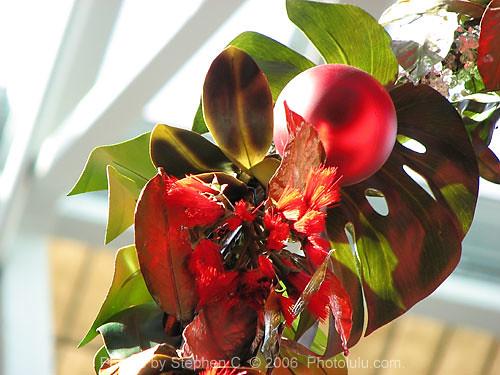Hawaiian Christmas Decorations Flickr Photo Sharing