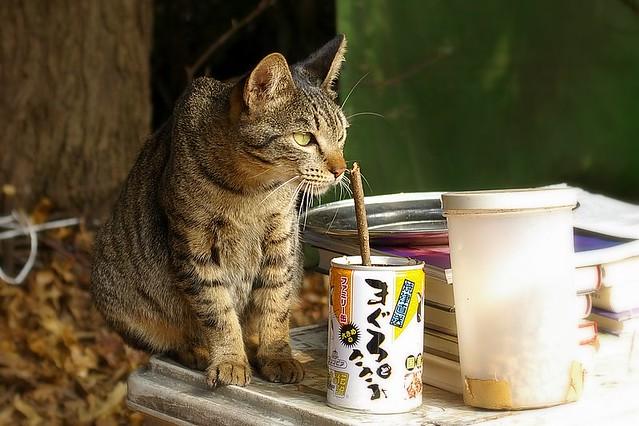 cat's food