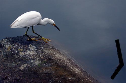 Lake Merritt Bird