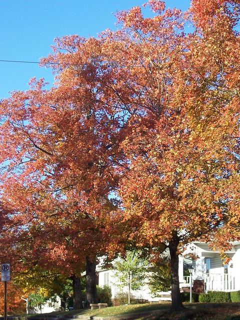 Fall Colors Historic District Olive St By Tsweden