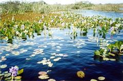 Waterway, Pantanal