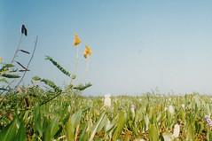 Wild Flowers, Pantanal